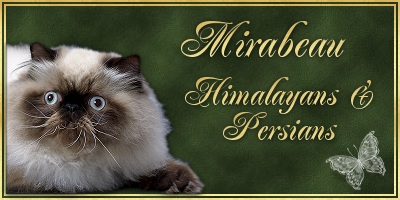 Mirabeau Persians and Exotics